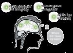 <p>Die AQL-Technologie nutzt ähnliche Verknüpfungs- prozesse wie der menschliche Denkprozess</p>